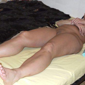 cougar Perpignan